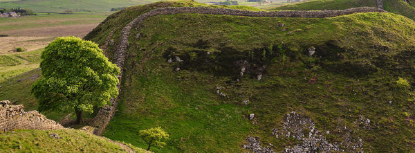 England, Northumberland, Northumberland National Park. Panoramic view of Sycamore Gap, a famous landmark along Hadrian's Wall
