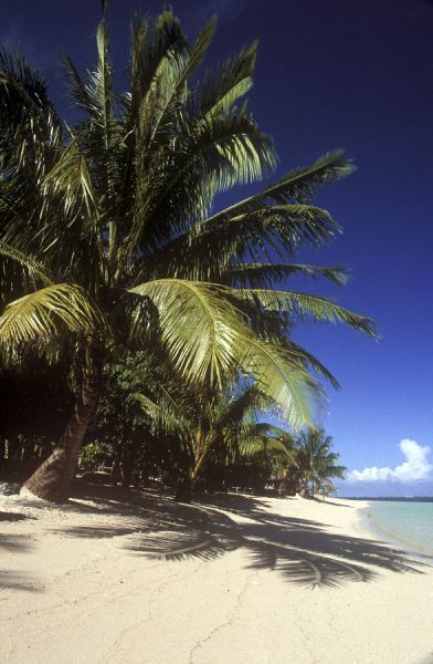 INDEPENDENT SAMOA, Savai'I, Manase Beach. The pristine white sands of this tropical beach, with simple Fales offering shelter