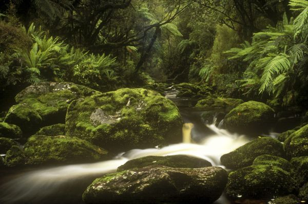NEW ZEALAND, Stewart Island, Rakiura National Park. Freshwater stream flowing through native forest