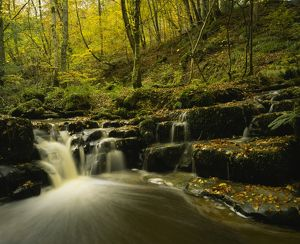 ENGLAND northumberland Briarwood banks A stream flowing through the woodland of this
