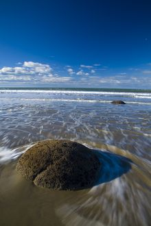 New Zealand, Otago, Moeraki Boulders. One of the famous spherical Moeraki boulders